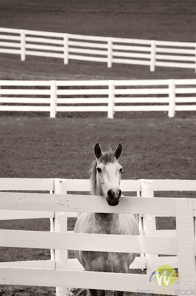 Kentucky Horse Park.