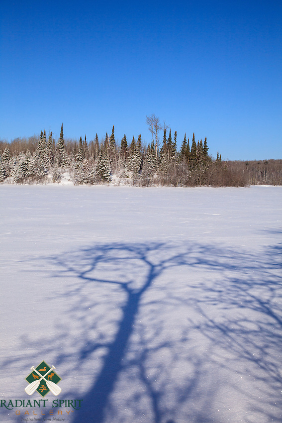 &quot;Tree Shadows on the Snow&quot;<br />