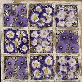 Interlitho-Alberto, FLOWERS, BLUMEN, FLORES, photos+++++,seed box, blossoms,KL16500,#f#, EVERYDAY