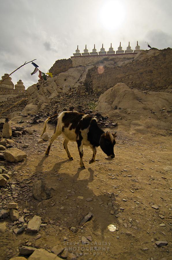 Shey Palace,  Leh, Ladakh, India.