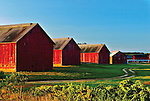 Tobacco Barns at Sunrise