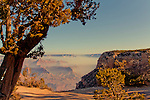 A misty fall morning at the South Rim of Grand Canyon National Park.