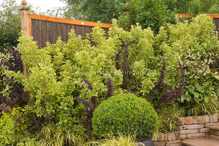 Garden Design Hedges garden borders & garden design stock images - images | plant