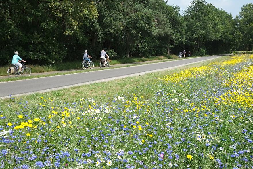 Nederland, Udenhout,  14 juli  2013<br /> Bloeiende akkerrand Bloeiende akkerranden zijn niet alleen mooi, het is ook zeer nuttig voor bijen en hommels die ook zorgen voor de bevruchting van veel gewassen. De bloeinde akkerranden moeten echter ook toeristen aantrekken en maken het brabantse landschap aantrekkelijker voor toerisme<br /> Foto(c): Michiel Wijnbergh