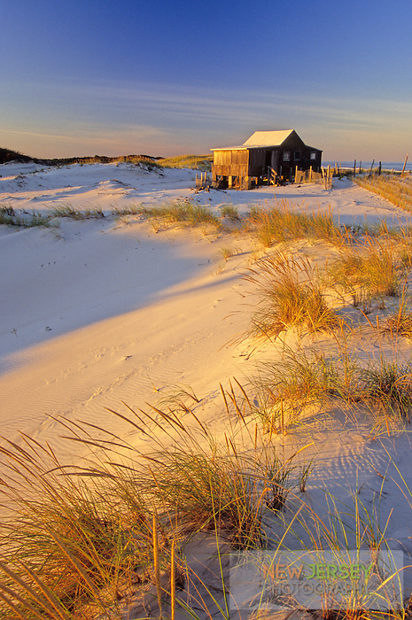 Coastal Sand Dunes & Cottage, Island Beach, New Jersey