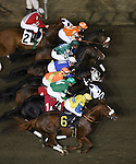 Meadowlands -  Thoroughbreds