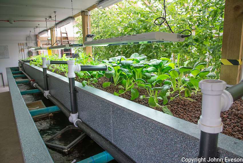 An aquaponics unit, Todmorden, West Yorkshire. Water from tanks containing Talapia fish is pumped in to a trough with expanded clay with the nutrients used to grow cress, pak choi, and rocket.
