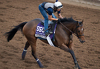 DEL MAR, CA - NOVEMBER 02: Paulassilverlining, owned by Juddmonte Farms, Inc. and trained by Chad C. Brown, exercises in preparation for Breeders' Cup Filly & Mare Sprint at Del Mar Thoroughbred Club on November 2, 2017 in Del Mar, California. (Photo by Michael McInally/Eclipse Sportswire/Breeders Cup)