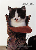 Carl, ANIMALS, photos(SWLA461,#A#) Katzen, gatos