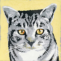 Portrait of grey tabby cat ExclusiveImage