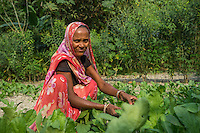 Vegetable farmer Anita Devi, a member of a Farmer's Producer Group, tends to her mixed crops of radish and spinach in her farm in Machahi village, Muzaffarpur, Bihar, India on October 26th, 2016. Non-profit organisation Technoserve works with women vegetable farmers in Muzaffarpur, providing technical support in forward linkage, streamlining their business models and linking them directly to an international market through Electronic Trading Platforms. Photograph by Suzanne Lee for Technoserve