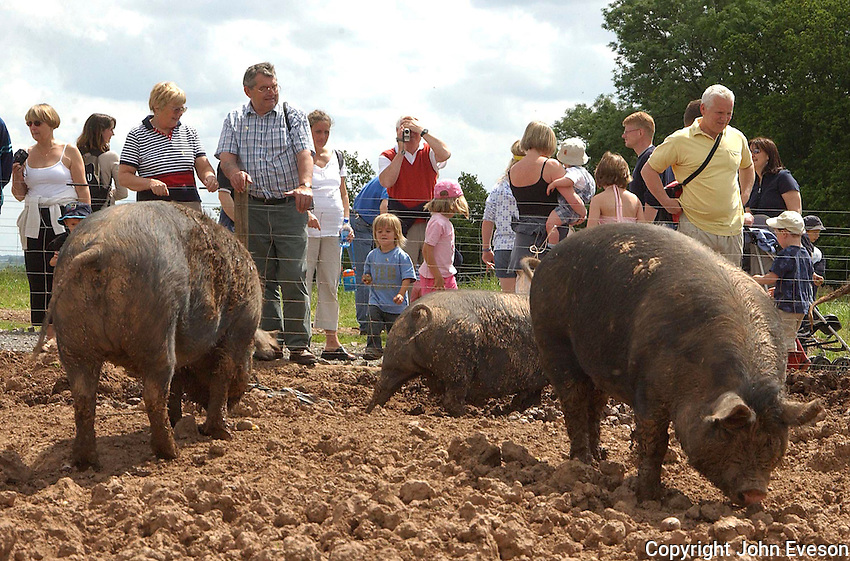 Visitors to an open farm viewing pigs.