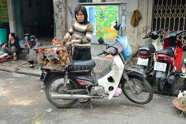 Asia, Vietnam, Hanoi. Hanoi old quarter. Vietnamese woman transporting live chicken on her motorbike.