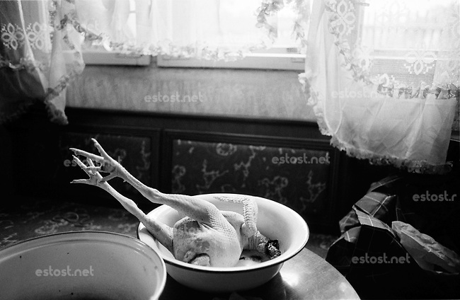 UNGARN, 07.1989.Miskolc-Diosgyor (korrekter: Di--sgy?r).Alltag vor dem Systemwechsel:  Frisch geschlachtetes Huhn bei einer Romafamilie. .Everyday life before the system change:  Freshly cut chicken with a Roma family..© Martin Fejer/EST&OST