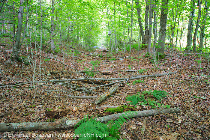 A section of the closed Wilderness Trail just pass the Bondcliff Trail junction in the Pemigewasset Wilderness of New Hampshire. This closed section of trail follows the old East Branch & Lincoln Railroad Bed (1893-1948). The brush has been placed on the closed section of trail to discourage usage. And the brush will help in the Revegetation process of the area.