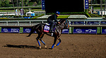October 30, 2019: Breeders' Cup Sprint entrant Imperial Hint, trained by Luis Carvajal Jr., exercises in preparation for the Breeders' Cup World Championships at Santa Anita Park in Arcadia, California on October 30, 2019. Carolyn Simancik/Eclipse Sportswire/Breeders' Cup/CSM