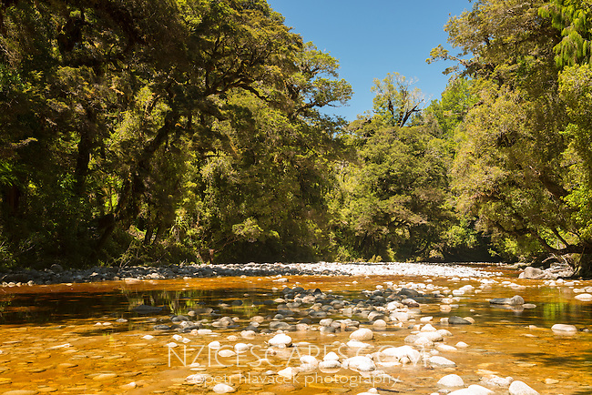 Tannin stained Oparara river in Oparara Valley near Karamea, Kahurangi National Park, Buller Region, West Coast, New Zealand