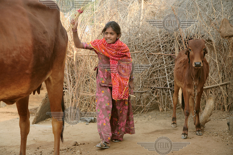 Jetu, the 13 year old newly elected Prime Minister of the Children's Parliament in Rajasthan. She still keeps her day job herding livestock in her village, Palady Pathanam...
