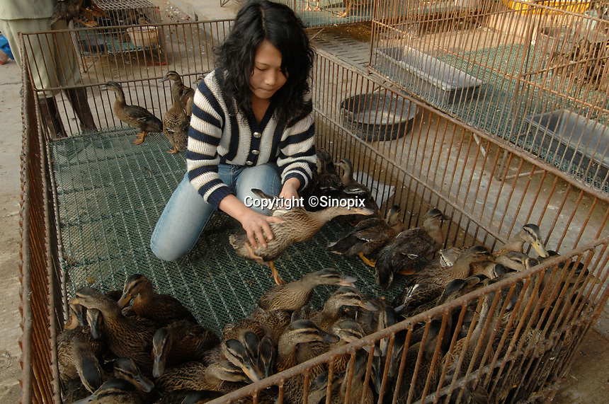 "Ducks are sorted out at a bird and poultry marker in Guangzhou, China .in this file photo. China's wild animal markets, where live wild animals and reared animals are sold are the source of many viruses that mutate as they ""jump"" from animals to humans. The coronavirus COVID-19 is thought to have originated in an animal market in China. <br /> By Sinopix Photo Agency"
