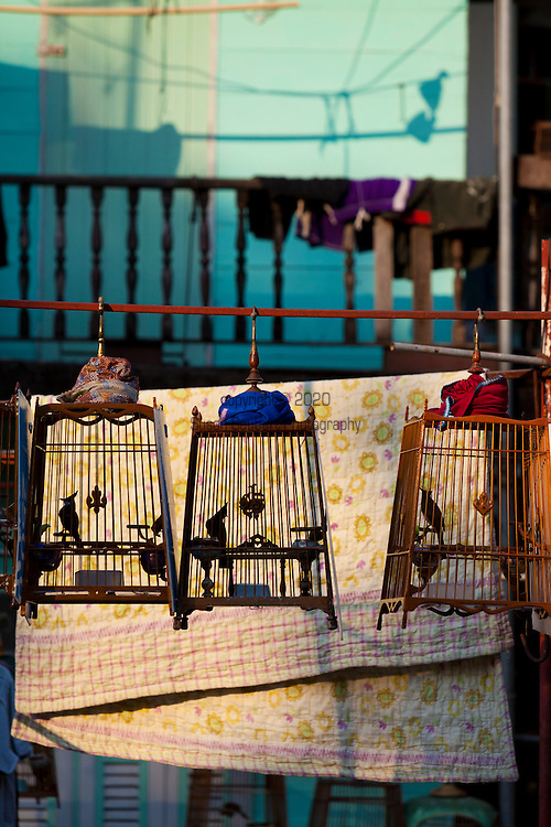 Caged birds as pets in Old Bangkok, Thailand