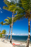 Palm trees on Turquoise Bay in front of <br />