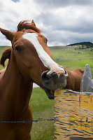 Horse chewing on wood sign