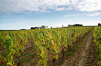 View over the Medieval Chateau d'Yquem and its vineyard with Semillon vines and sandy gravely soil, blue sky sunshine and clouds  at harvest time  Chateau d'Yquem, Sauternes, Bordeaux, Aquitaine, Gironde, France, Europe