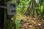 Research camera trap in semi-deciduous tropical moist rainforest, Cocobolo Nature Reserve, Mamoni Valley, Panama