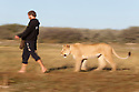 Botswana, Kalahari, Valentin Gruener  walking with a lioness; he raised her on a private reserve from a small dying cub to a healthy adult