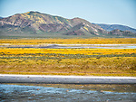 Soda Lake and golden wildflowers covering the hills beyond, the Carrizo Plain National Monument
