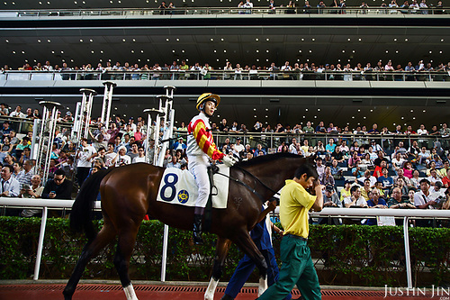 An unidentified jockey parades with an unidentified horse in the parade ring before a race at the Hong Kong Jockey Club.