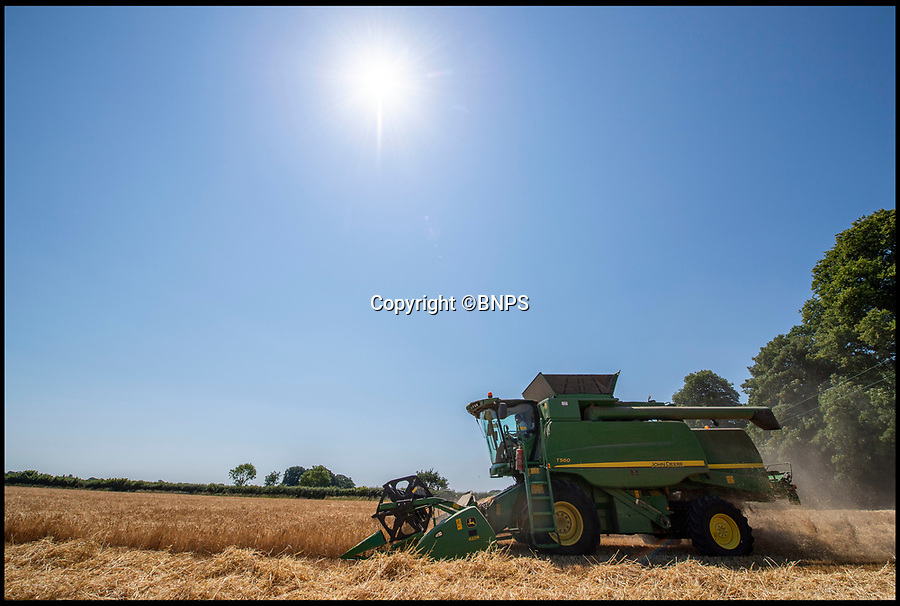 """BNPS.co.uk (01202 558833)<br /> Pic: PhilYeomans/BNPS<br /> <br /> The heatwave has caused an almost unheard of June harvest at a British farm.<br /> <br /> Bisterne Estate in Ringwood, Hants, produces seed barley, milling wheat and biscuit rye.<br /> <br /> Farm manager Martin Button says this is the earliest harvest there since 1976.<br /> <br /> They began harvesting their 750 acres of arable land on June 28, two weeks earlier than normal.<br /> <br /> However, they are expecting a significantly reduced yield as the barley grain is much smaller than in a typical year, which was been attributed to the dry summer.<br /> <br /> He said: """"We've never started in June in the 30 years I've been here.<br /> <br /> """"The earliest I can remember is July 2, and we would normally start the harvest between the 12th and 14th of July."""