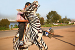 Donkey painted to resemble zebra for the amusement of tourists