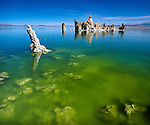 "Mono Lake, a large, shallow terminal (no outlet) saline lake formed at least 760,000 years ago. Diversion of water inflows by Los Angeles beginning in 1920's lowered lake levels 30% by 1982, exposing previously submerged calcium carbonate tufa formations and threatening vital migratory bird resting area and food sources. Nearly 2,000,000 waterbirds, including 35 species of shorebirds, use Mono Lake to rest and eat for at least part of the year including second largest nesting population of California gulls. Name  ""Mono"" from ""Monachi"", a Yokut term for the tribes that lived on both the east and west side of the Sierra Nevada. Mono County, CA."