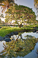 Pond reflecting trees. Grand Hyatt, Kauai, Hawaii