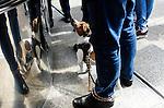 GERMANY, Hamburg, dog at sausage booth / DEUTSCHLAND, Hamburg, Hund an der Bratwurstbude