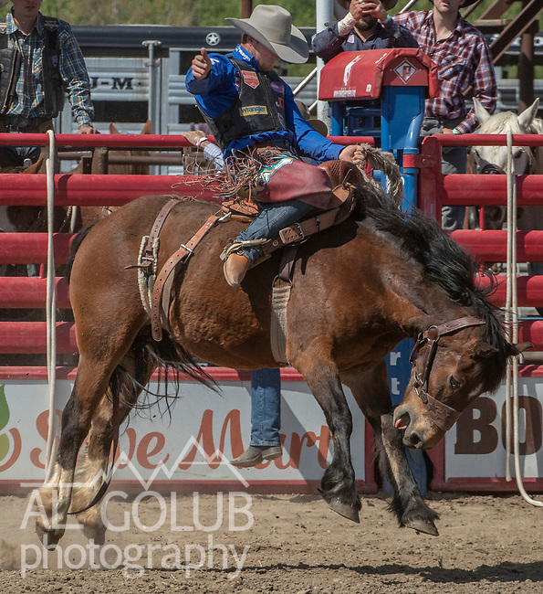 Saddle Bronc rider CoBurn Bradshaw from Beaver, Utah scores 84 points at the 68th annual Oakdale Saddle Club Rodeo on Sunday, April 14, 2019.  (Al Golub/Record Photo)
