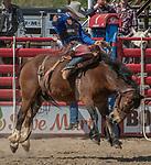 Saddle Bronc rider CoBurn Bradshaw from Beaver, Utah scores 84 points at the 68th annual Oakdale Saddle Club Rodeo on Sunday, April 14, 2019.  (Al Golub/Record Photo)