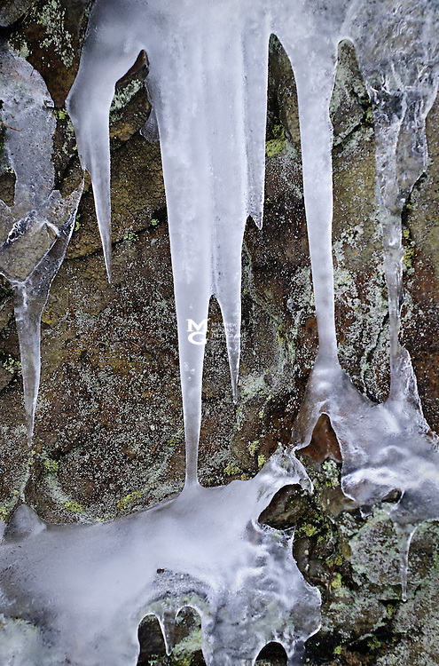 Winter Lichen & Ice