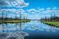 Clouds reflected in the a wetland of the boreal forest<br />  Yellowknife Highway<br /> Northwest Territories<br /> Canada