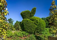 """Festival International des Jardins à Chaumont-sur-Loire.<br /> Thème de l'année 2009, """"Jardins de couleur"""".<br /> Dans un jardin à l'entrée du Domaine : topiaire en forme de lapin travaillé dans de l'if."""