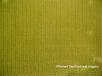 63801-10820 Alfalfa field after it's been cut and before it is baled-aerial Marion Co. IL