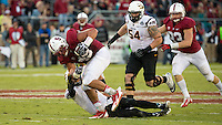 Stanford, CA -- September 21, 2013:  Stanford's Ben Gardner picks up a fumble during a game against Arizona State at Stanford Stadium. Stanford defeated the Sun Devils 42 - 28.
