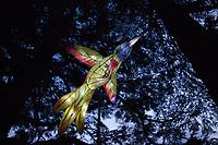 Paper Bird Lantern in Pine Forest at Night, Washington State, WA, USA.