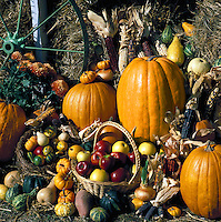 Fall harvest foods at a country store in Arkansas. Little Rock, Arkansas.