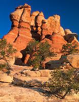 Canyonlands National Park, UT<br /> Morning light on sandstone needles on Elephant Hill Trail - Needles District