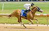 Help Me Jeebis winning at Delaware Park on 5/28/12