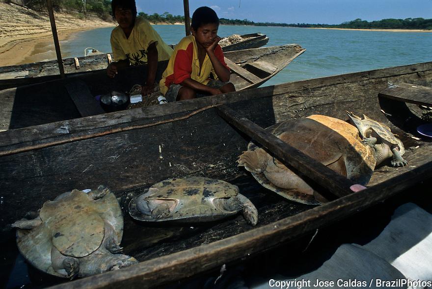 Karajas Indians hunting Amazon turtle, in Portuguese tartaruga-da-Amazonia ( Podocnemis expansa ), Bananal island, Amazon rain forest, Brazil.