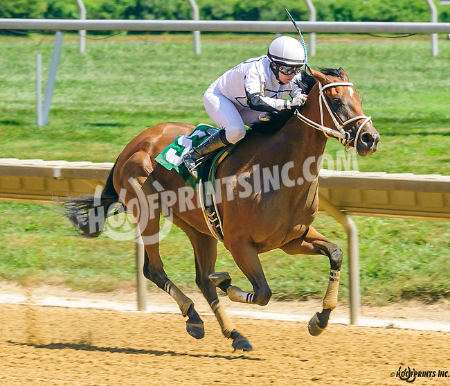 Brypooter winning at Delaware Park on 8/15/16