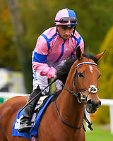 N over J ridden by Adam Beschizza goes down to the start of The Bathwick Car & Van Hire Novice Auction Stakes during Bathwick Tyres Reduced Admission Race Day at Salisbury Racecourse on 9th October 2017